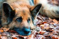 Frau beißt Hund – in die Nase und ins Ohr