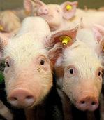 Fleisch-Kennung mit Biss oder freiwilliges Luxus-Label?