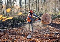 Waldarbeiter verletzt sich schwer / Hubschrauber im Einsatz