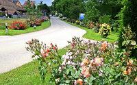 Rosenblüte am Ortseingang