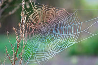Warum viele sich vor Spinnen ekeln – und was man dagegen tun kann