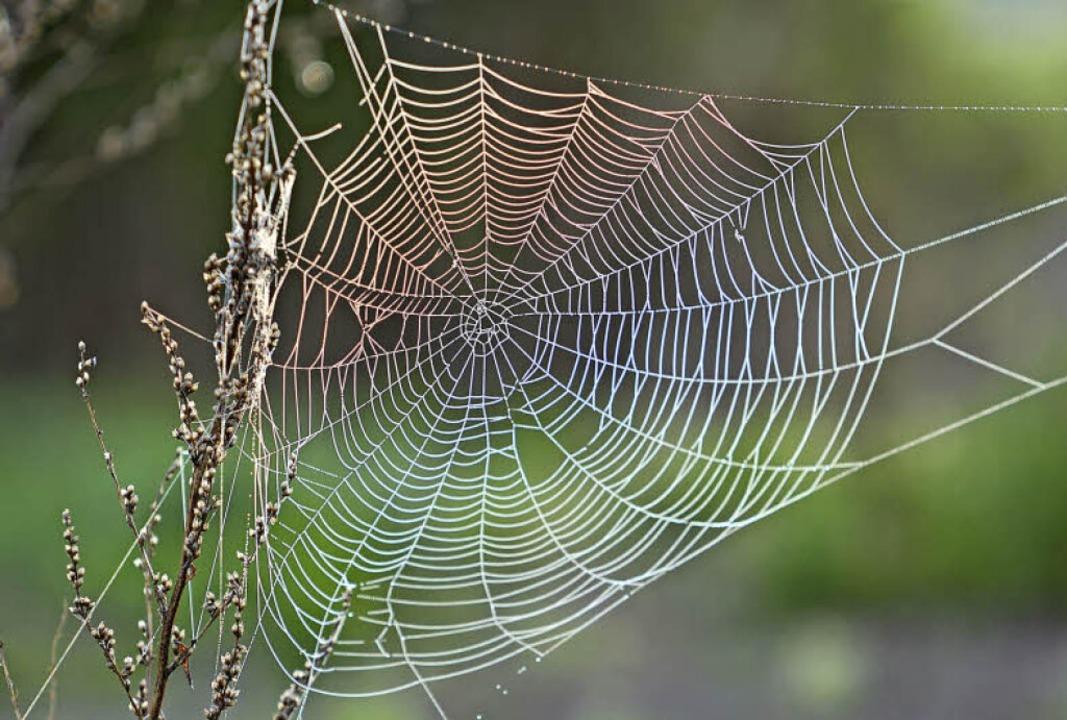 Keine Spinne da. Spinnenphobiker lässt das Bild dennoch erschauern.  | Foto: Fotolia.com/lassedesignen