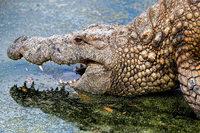 Krokodil am Ufer? Stofftier sorgt für Polizeieinsatz in Nagold