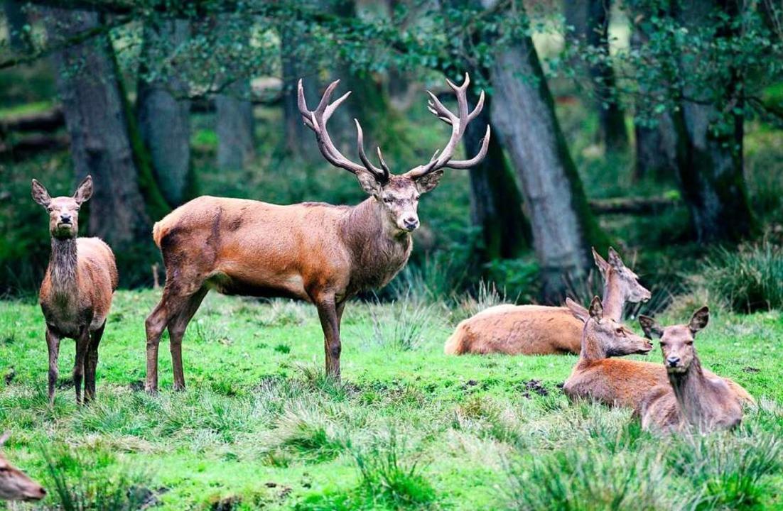 Wer sich für die Wildtiere des Schwarw... in Schluchsee auf die Pirsch begeben.  | Foto: Carsten Rehder