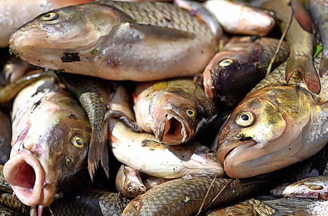 Viele Fische sind bundesweit bereits gestorben.   | Foto: dpa