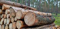 Hotzenwälder Förster sind mit Urteil zufrieden