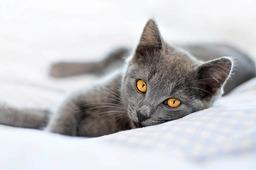 Ein Hotel für Katzen