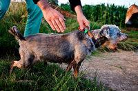Feuerwehr befreit Hund aus Rohr – mit einem Minibagger