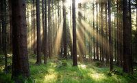 Keine Zerschlagung im Wald