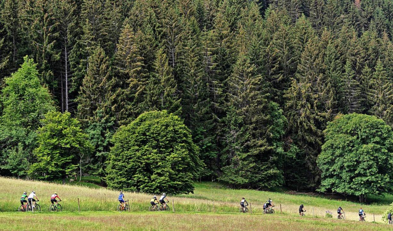 Wiese, Wald und bunte Pulks: Ein bewegter Fahrrad-Traum  | Foto: Patrick Seeger
