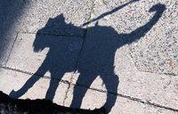 Mann schlägt und tritt vor Einkaufszentrum in Weingarten auf seinen Hund ein