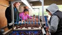 Köstliche Kirschen: ein Besuch auf dem Müllheimer Obsthof Sehringer