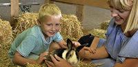 Hauptattraktion sind Kaninchen im Streichelzoo