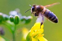 Stadtverwaltung Freiburg will weniger Pestizide auf städtischen Flächen