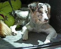 Schäferhundeverein feiert Jubiläum