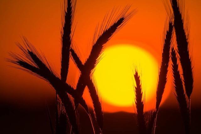 Sommersonnenwende: Am Donnerstag ist der längste Tag des Jahres