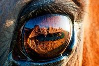 Reitturnier in Schopfheim wird wegen eines kranken Pferdes abgesagt