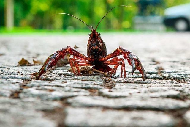 Wie sich ausgesetzte Tiere neu organisieren – und Kolonien gründen