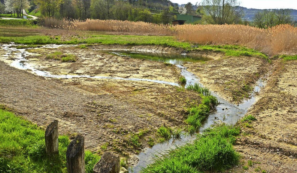 Im Rückhaltebecken Breitenweg haben Hy...schwemmte Pestizide  abgebaut werden.   | Foto: Manfred Frietsch