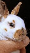 Denzlinger Kleintierzüchter können bauen