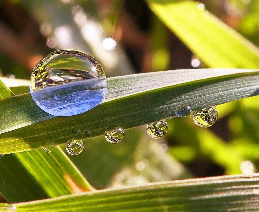 Regentropfen setzen ätherische Öle aus... die einen angenehmen Duft verströmen.  | Foto: Dagmar Hitzfeld