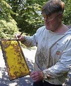 Vom Honig bis zum Gelée Royal
