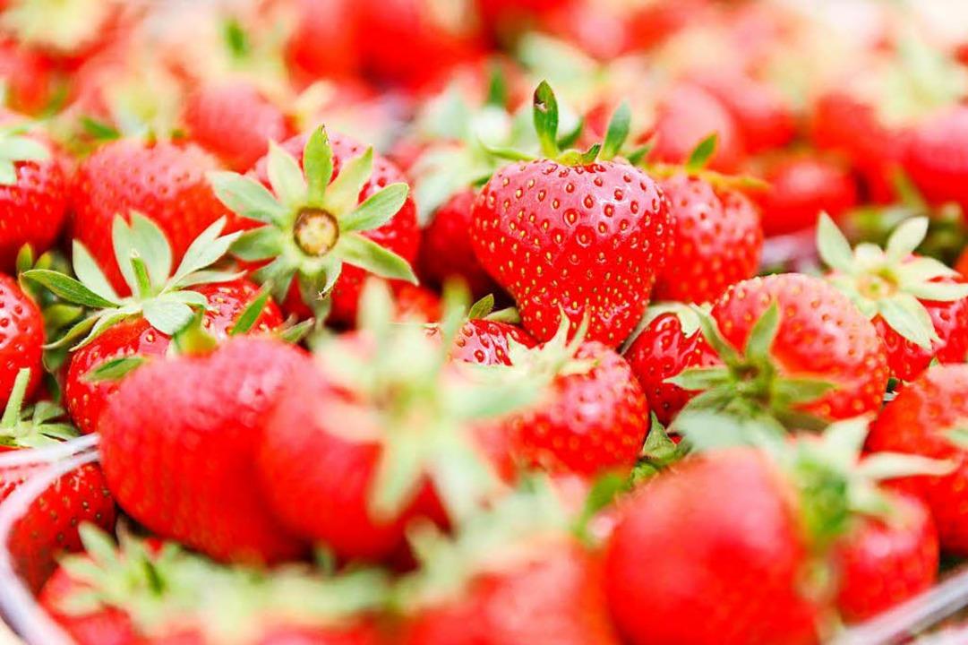 Erdbeeranbauern schlagen Alarm.  | Foto: dpa