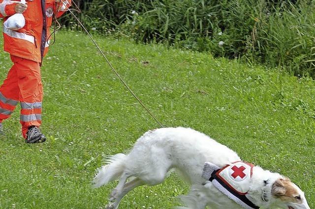 Wo Hunde Menschen helfen