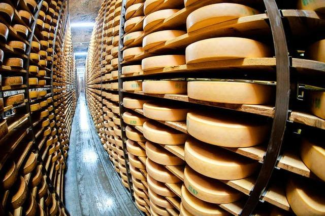 Kommt die Käserei der Molkerei Schwarzwaldmilch nach Titisee-Neustadt?