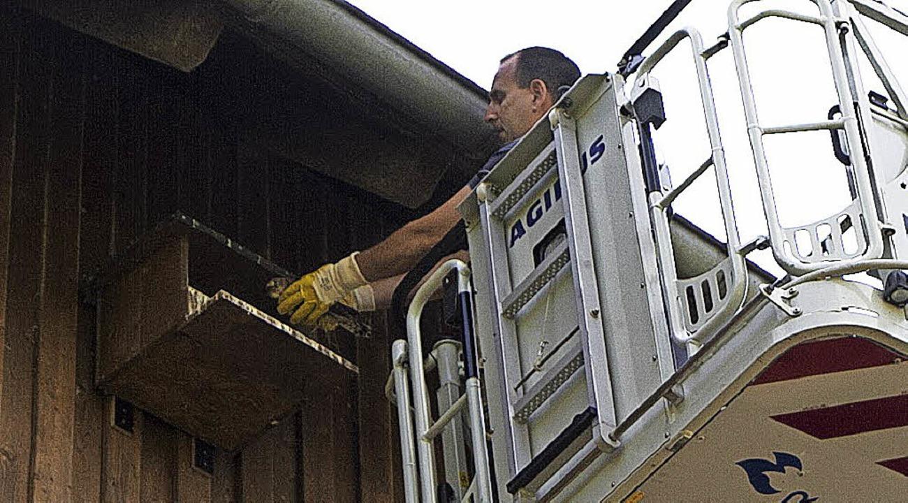 Peter Schultis von der  Feuerwehr Elza...mfalken behutsam wieder in sein Nest.   | Foto: Daniel Fleig