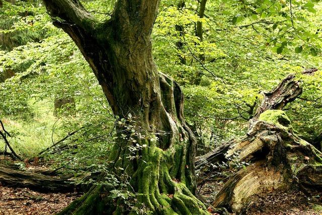 Erholen im Unterholz