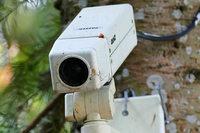 Diebstahl eines Papageis: So soll das Vogelhaus in Utzenfeld besser gesichert werden