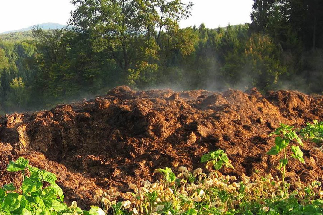 Dampfende Misthaufen aus dem vergangenen Jahr  | Foto: Helmut Kohler