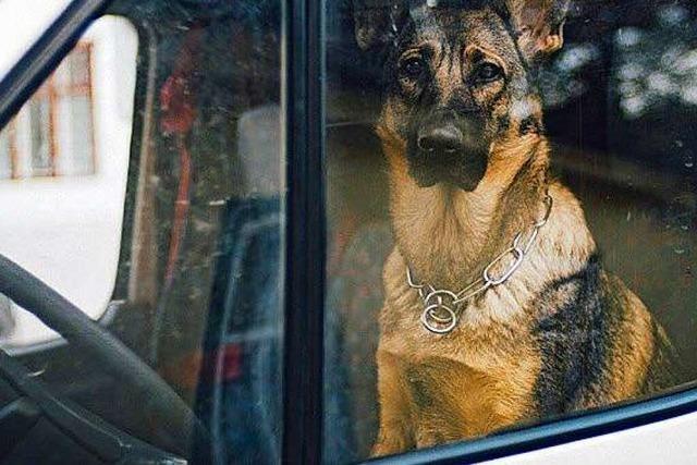 Schäferhund muss auf Europa-Park-Parkplatz aus Auto befreit werden