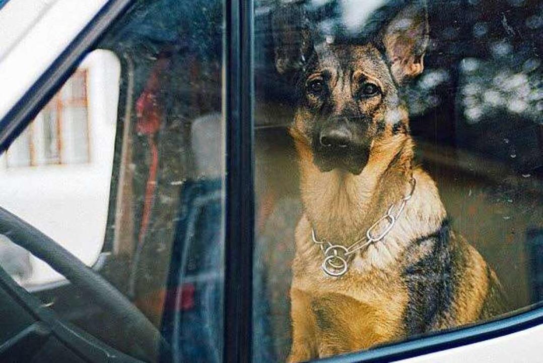 Nach Einschätzung  des Polizeipostens ...ferhundes   unumgänglich. (Symbolfoto)  | Foto: Petra (Fotolia.com)