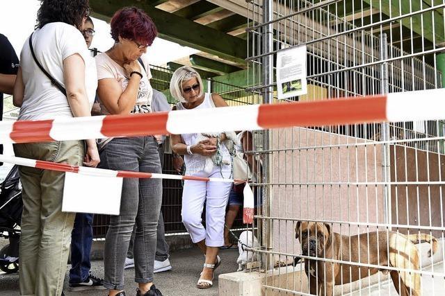 Hunde warten lange auf neues Zuhause