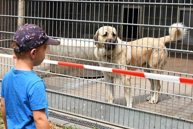 Beschlagnahmte Hunde warten lange auf neues Zuhause