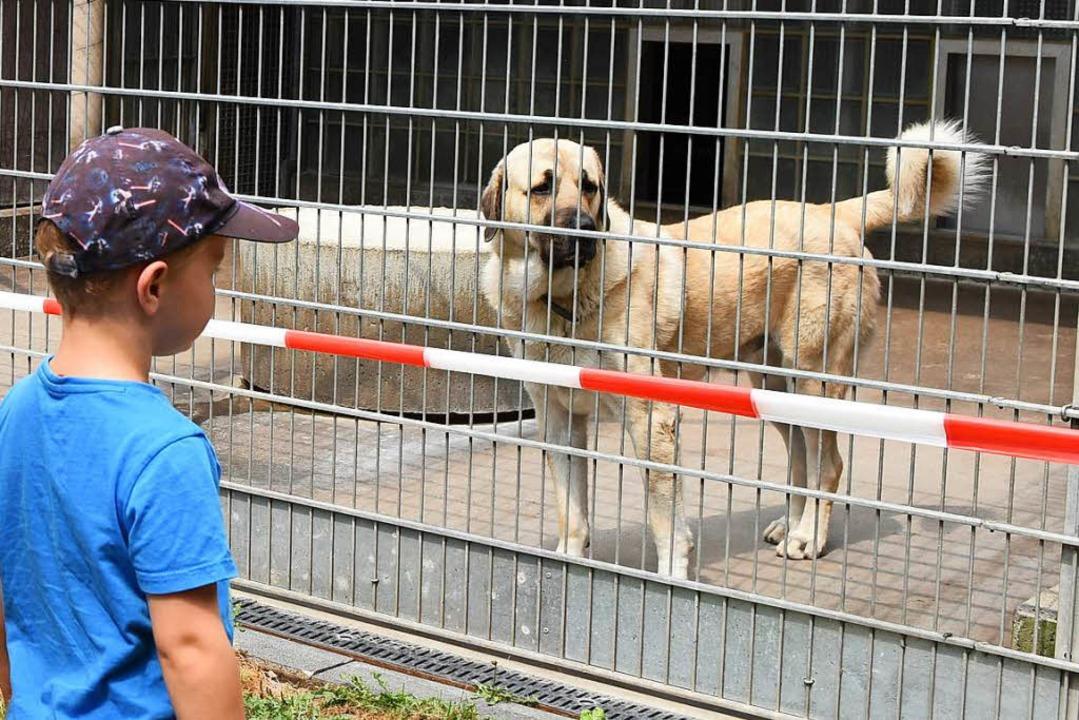 30 Hunde leben derzeit im Tierheim im Stadtteil Lehen.    Foto: Rita Eggstein