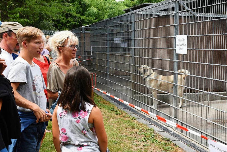 Großer Andrang vor den Hundekäfigen    Foto: Rita Eggstein