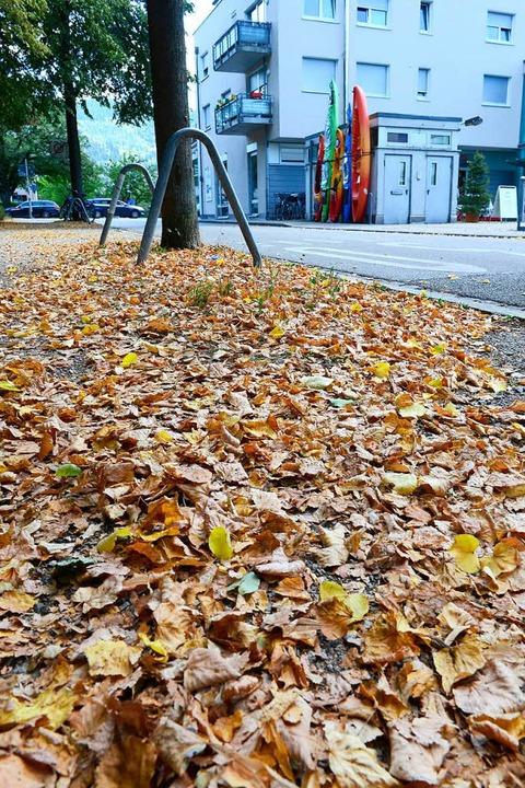 Viele Bäume werfen ihr Laub ab.  | Foto: Ingo Schneider