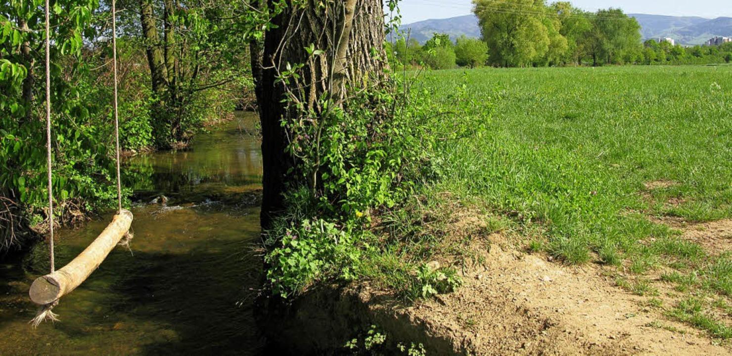 So grün wird es in Dietenbach nicht bleiben.   | Foto: Nele wagner