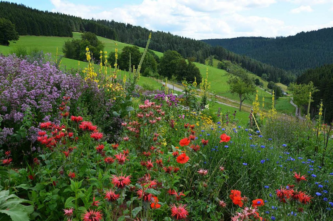Heil- und Duftpflanzen   | Foto: Petra Kistler