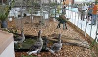 Kleintierzüchter in Reute