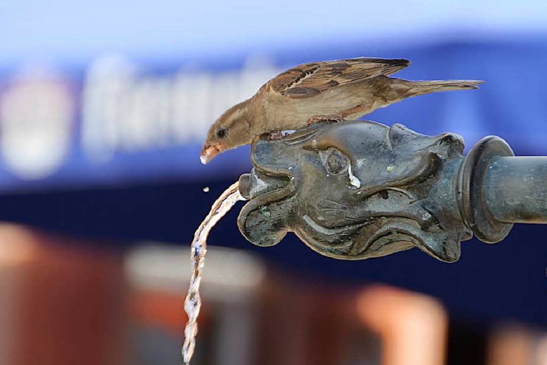 Die Tiere brauchen Wasser, aber Pfützen und Gräben sind ausgetrocknet.    Foto: Janik Kury