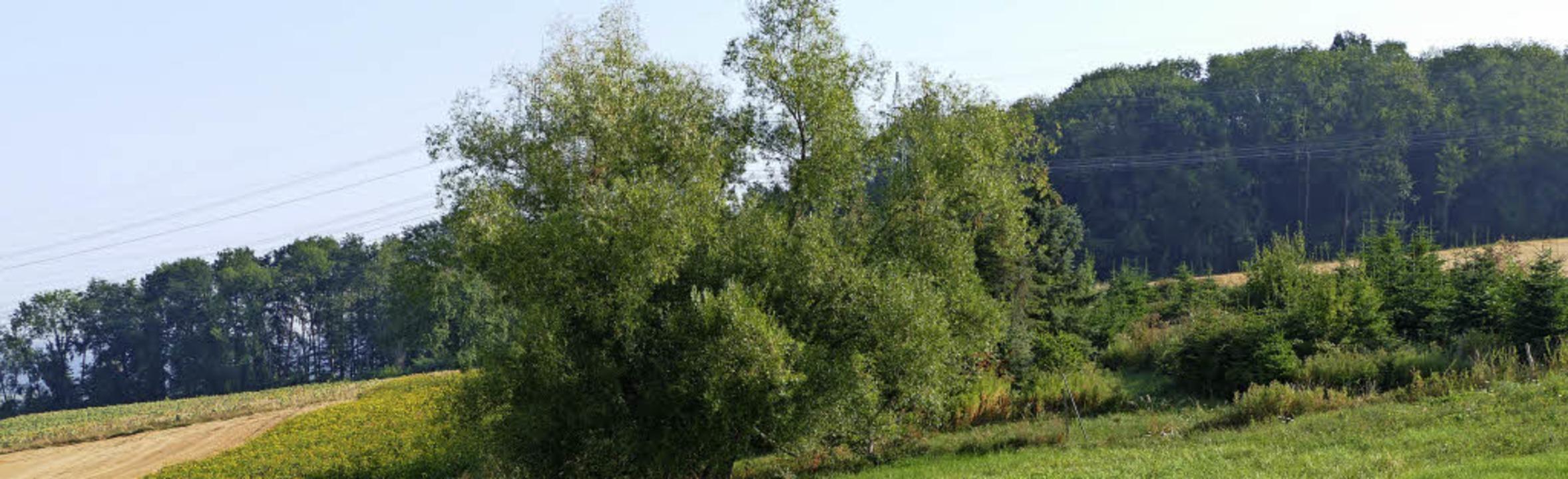Bisher hatte Rümmingen nicht viel Wald...Waldfläche durch Zukauf zu vergrößern.    Foto: Victoria Langelott