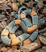 GESICHT DER WOCHE: Schlange auf Abwegen