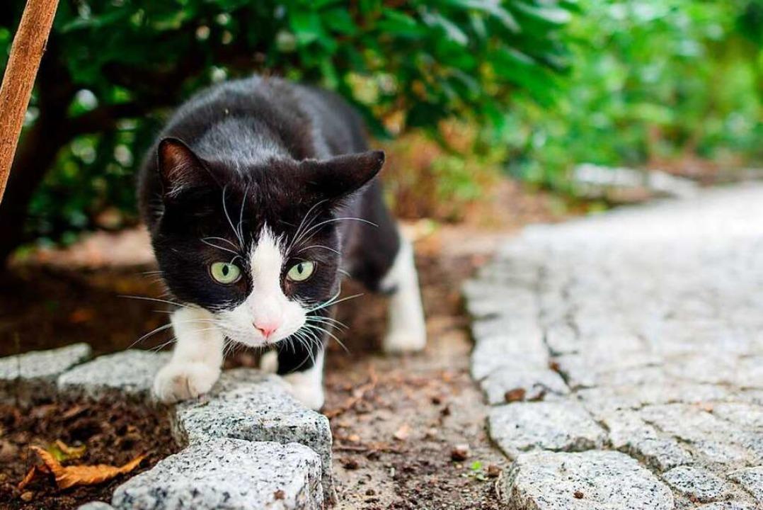 Süß, aber auch ein Raubtier: die Katze  | Foto: dpa