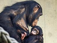 Ponima bleibt noch ganz nah bei ihrer Mutter