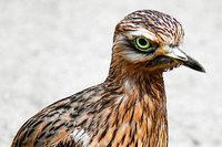 Bauern klagen gegen die Erweiterung des Vogelschutzgebiets