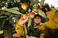 Übergangslösung für Saisonarbeiter fällt wohl weg